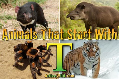 animals that start with u list of amazing animals animals that start with t list of amazing animals