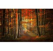 Fall Path Forest Sun Rays Nature Leaves Trees
