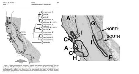 pattern formation in salamanders monterey ensatina ensatina eschscholtzii eschscholtzii