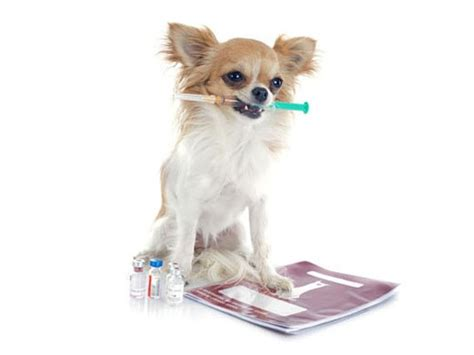 diabetic dogs a new insulin treatment for diabetic dogs petmd
