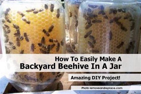How To A Beehive In Your Backyard by How To Easily Make Your Own Backyard Beehive Musely
