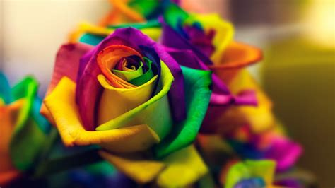 Hd Car Wallpapers 1080p Roses by Roses Flowers Hd Wallpapers Free