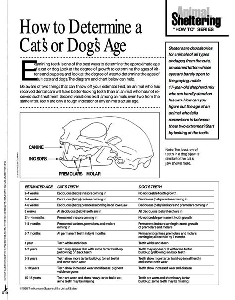 puppy teething age chart best 25 veterinary medicine ideas on veterinary technician veterinary
