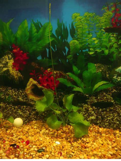 plants flowers underwater banana plant