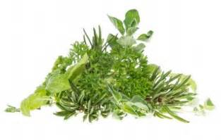 In Home Herb Garden by The 5 Letter Word Taking Over The Fast Food World