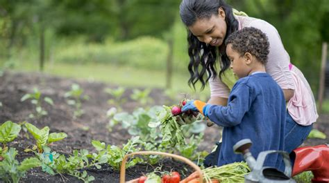 essential tips  vegetable gardening   pacific