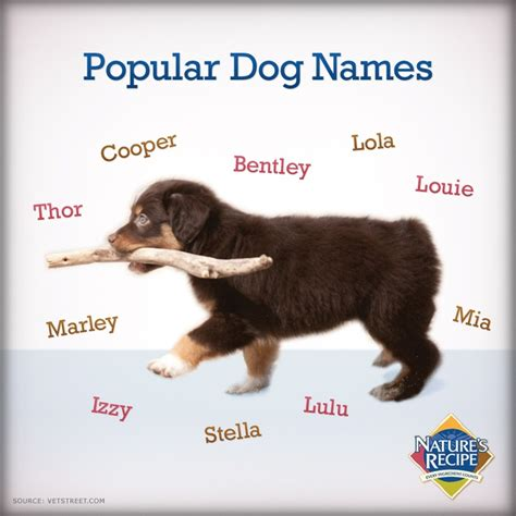 p names for dogs 10 best images about names on for dogs names and pets