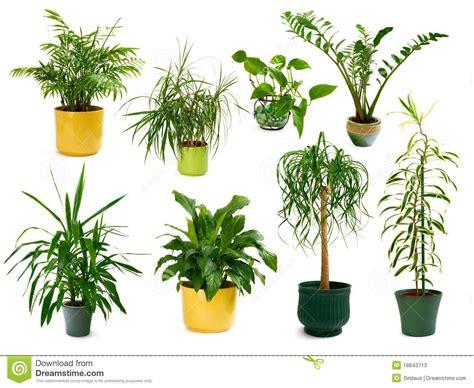 imagenes de plantas verdes de interior ocho diversas plantas de interior en un conjunto fotos de