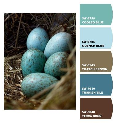 paint colors robin egg blue discover and save creative ideas