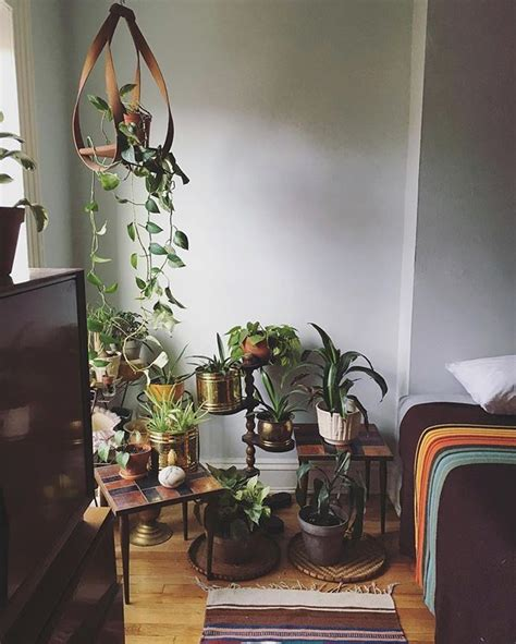17 best images about houseplants on