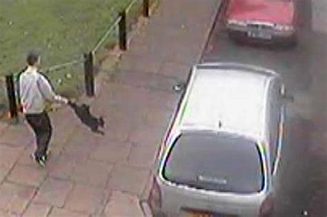 swinging arm cat cat swung by tail man hands himself in to police mirror