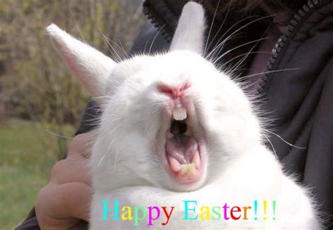 Laughing Man Comedy Barn Happy Easter Bunny 1funny Com