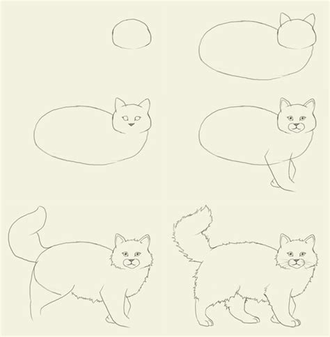 how to draw cat cats how to draw a cat how to draw