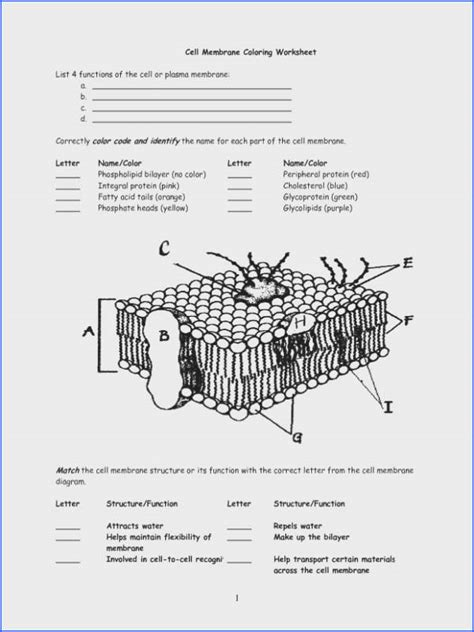 cell membrane  tonicity worksheet mychaumecom