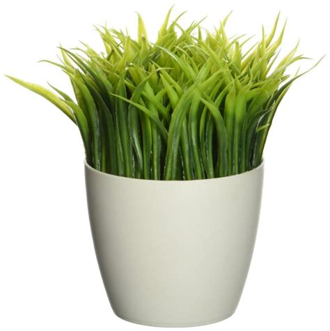 25 office plants that fit on your desk small business trends