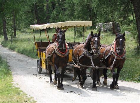 val roseg carrozze carrozza con cavalli in val roseg viaggi vacanze e