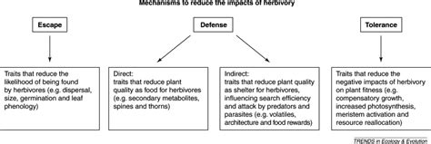 theory and pattern in plant defense allocation facing herbivory as you grow up the ontogeny of