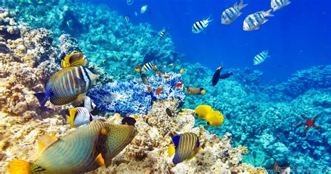 underwater world ocean fish coral reef wallpapers desktop