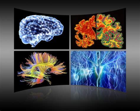 test sull intelligenza 5 cose inaspettate sull intelligenza scienze naturali