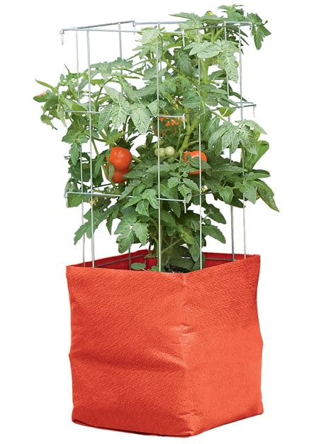 tomato grow bag kit