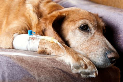 can dogs get sick from humans can you prevent canine cancer