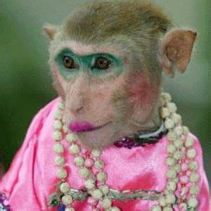 wallpaper monyet cantik 25 best ideas about funny monkey pictures on pinterest