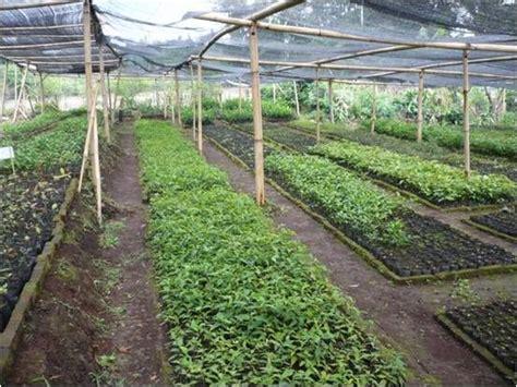 Jual Sayuran by Jual Benih Sayuran Benih Sayuran Murah Bibit Sayuran