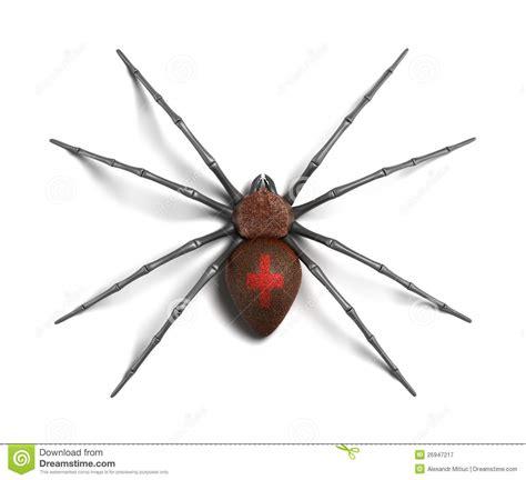 imagenes viudas negras ara 241 a viuda negra en la superficie blanca stock de
