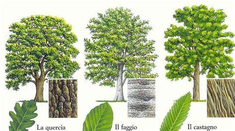 Elenco Nomi Alberi by Imparare A Riconoscere Gli Alberi Idee Green