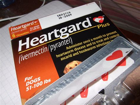 heartworm pills heartworm symptoms in dogs healthy paws