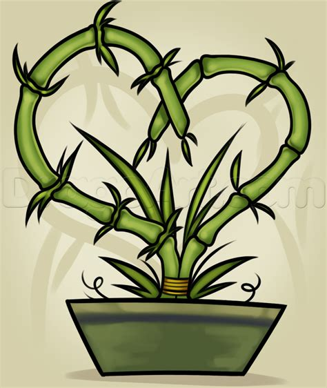 Drawing Of A Bamboo Tree by How To Draw A Bamboo Plant Step By Step Trees Pop