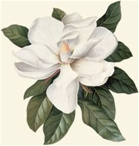 printable magnolia flowers 1000 images about southern on pinterest magnolias