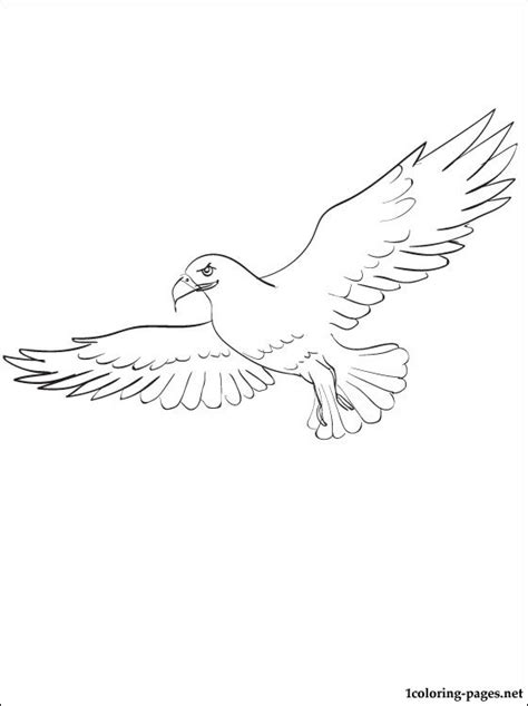 osprey coloring page for kids coloring pages