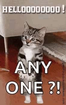 cat wave gifs tenor