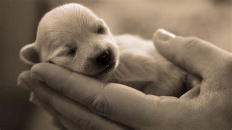 animal puppy puppy in wallpaper 183 ibackgroundwallpaper
