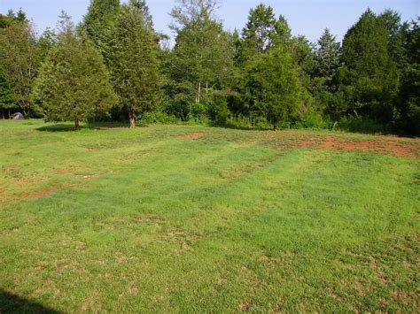 backyard grass need landscaping ideas and or websites for ideas grass