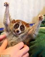 fica c 227 omigo primata sensa 231 227 o na internet pode matar voc 234