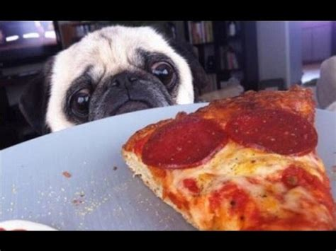 pizza puppy dogs stealing pizza compilation 2015
