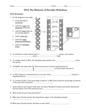 Heredity Worksheet by Heredity Worksheet Answers Photos Getadating