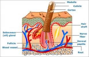 excretion and osmoregulation in accessory excretory