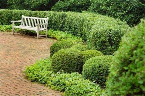 siepi per giardini curare siepi da giardino piante in giardino consigli
