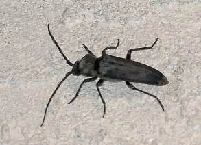 long skinny black bug in house it won t be long now images frompo