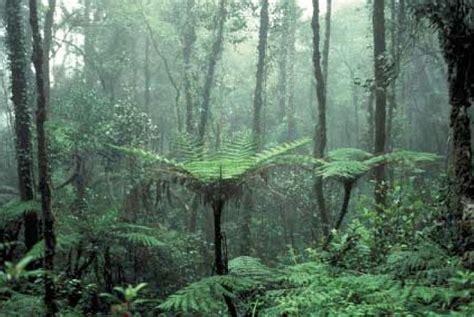 pisos en la selva del c piso altitudinal montano bosque selva pluvial montana