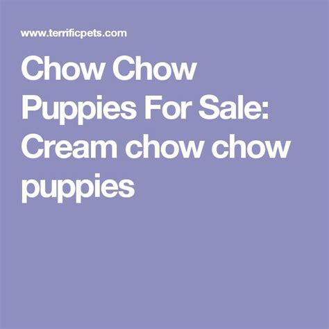 teacup chow chow puppies for sale 25 best ideas about chow puppies for sale on bake sale cookies bake sale