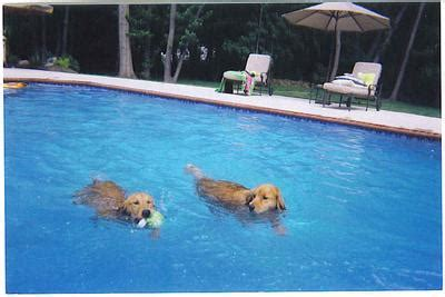 golden retriever rescue sa golden retriever rescue inc nj newsletter fall 2004 letters to grri