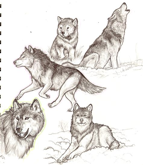 wolves drawings wolf sketches by kyndrii on deviantart