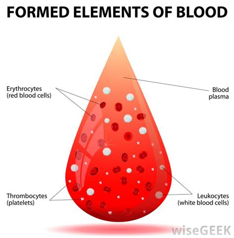 blood diagram what are the different types of lymphoproliferative disorders
