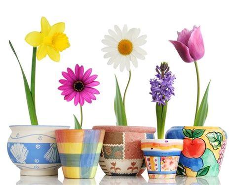 tipi di vasi modelli vasi da interno scelta dei vasi modelli vasi