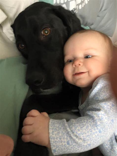 puppies vs babies puppies vs babies veterinarians in leesburg market animal clinic