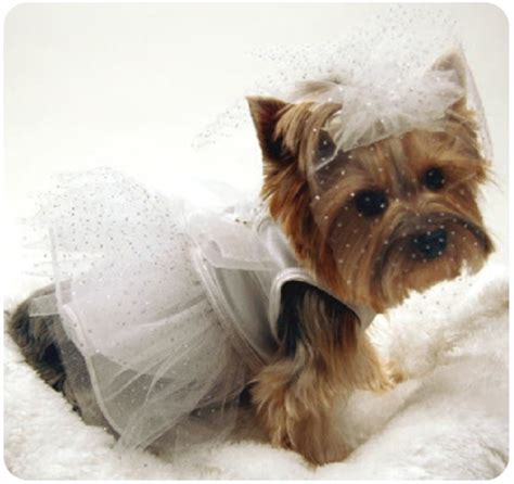 Wedding Attire For Dogs by Designer Wedding Clothing
